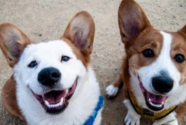 Full-time Dog Walking Position in Chelsea, NYC (Chelsea)