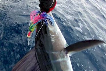 Offshore Fishing Tackle Rigger/Packer (Riviera Beach)