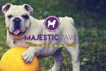 Love animals? Daily Dog-walker needed M-F ASAP! 🐶💓🐱 (Logan Square)