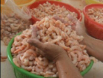 Seafood Handling/Packer (Bronx)