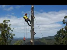 Tree cutter/climber (Southwest Ranches)