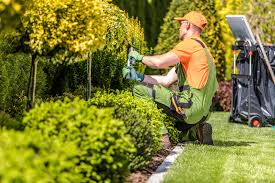 landscape worker for plants and planting-Hay trabajo (Davie)