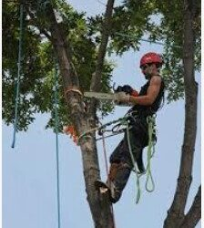 Tree trimmer and climber (697 SW 9th Terrace Pompano Beach, FL)