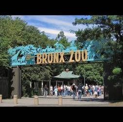 (READ COMPLETELY) (Beautiful Room for Rent) (Bronx Zoo)