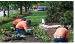 EXPERIENCED LANDSCAPERS WANTED-BLADERUNNERS ORLANDO (3851 Center Loop Orlando FL)