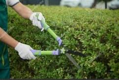 Landscape Crew Lead & L&O Spray Tech (Orlando)