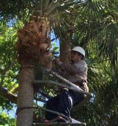AHORA CONTRATANDO POSICIONES PARA EMPRESA DE ÁRBOLES Y LANDSCAPING (Davie, FL)