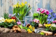 lANDSCAPE / JARDINERIA para Rivero Garden Maintenance
