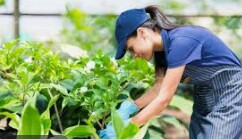 Outdoor Plant Nursery Worker (Davie)