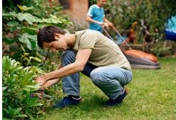 Se busca Trabajador de Landscaping (Hollywood)