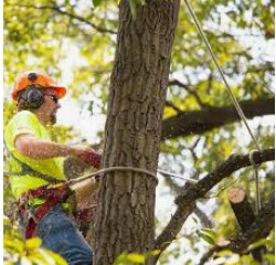 Busy Tree Service Hiring Experienced Tree Cutters (miami/ Cutler Ridge)