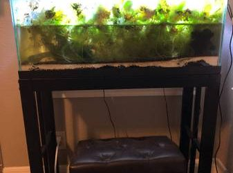 Free 10 gal Aquatic ecosystem in need of good home (League City)