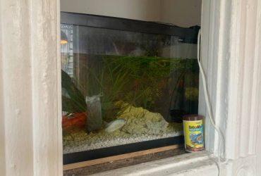 Fish tank 20 gal and fish!