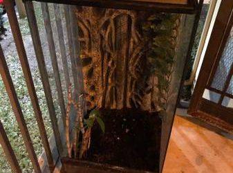 Free chameleon habitat (heavy)