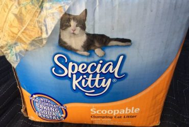 20 Pounds Of Special Kitty Litter (Hollywood)