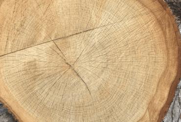 New Britain Tree Services