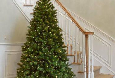 Christmas Tree (Round Rock)